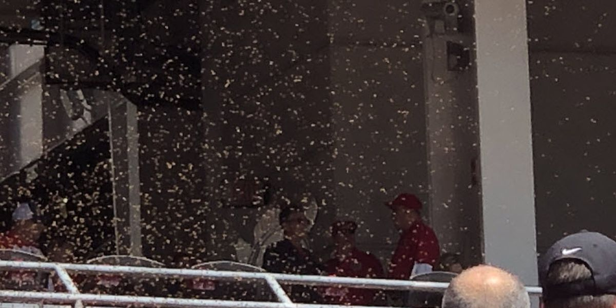 Swarm of bees briefly delays Reds game
