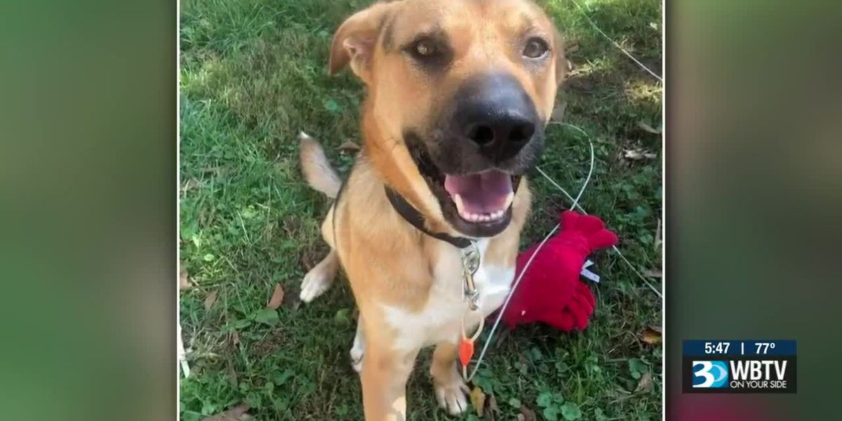 Rescue members to adopt dog they saved from 30-foot hole in Burke County, N.C.