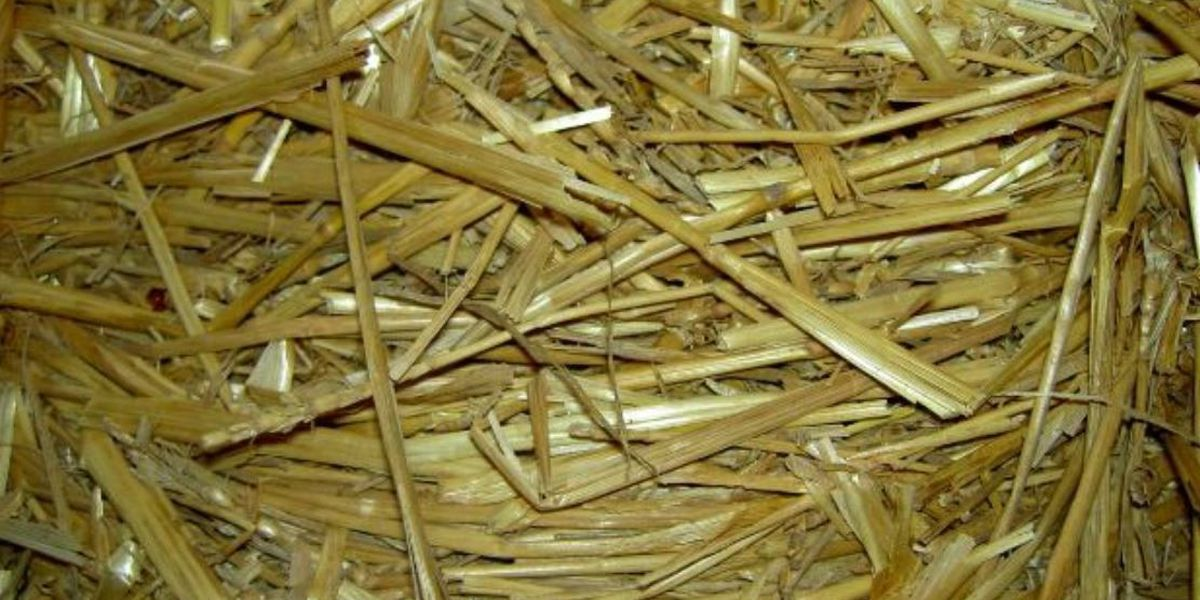 Donor provides straw bales to pet owners during cold weather