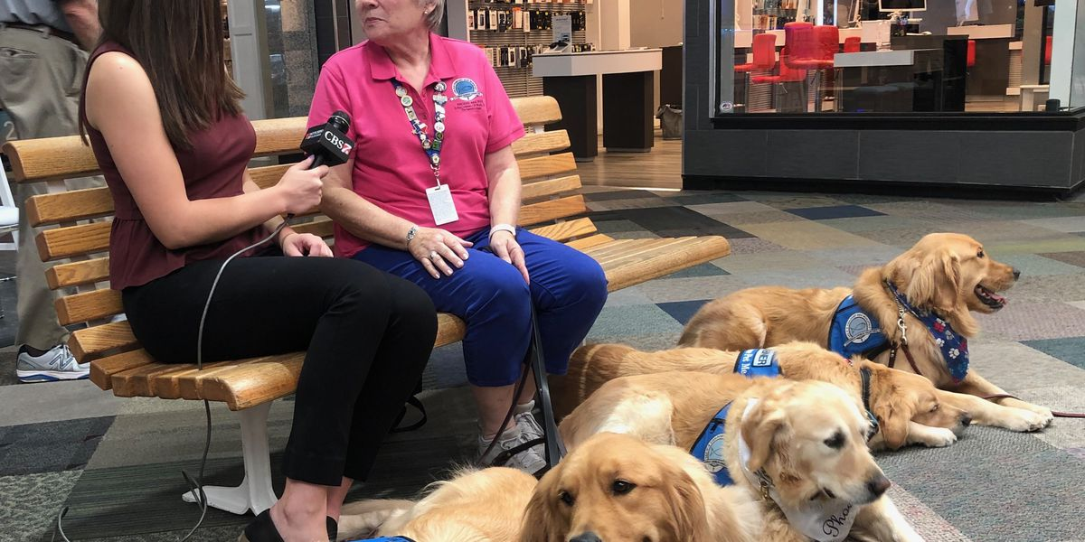 6 comfort dogs travel to Odessa for victims, survivors, first responders