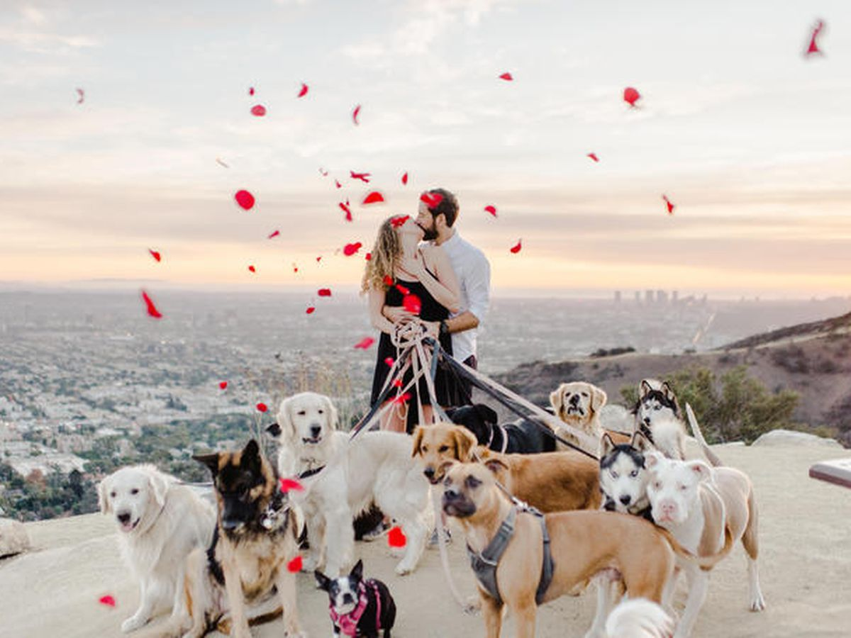 This man proposed to his girlfriend – with 16 dogs in tow