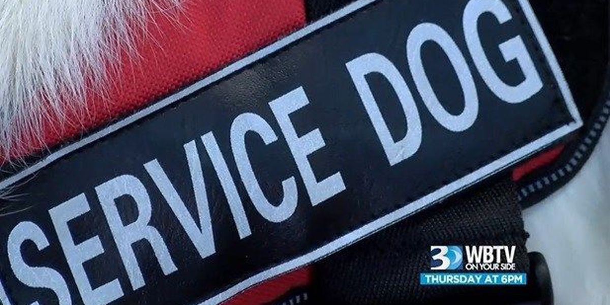 WBTV Investigates: Is that really a service dog?