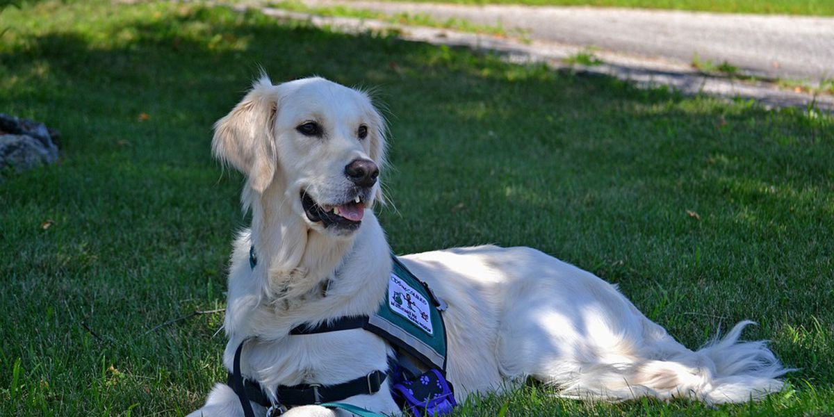 Service animals and emotional support animals are very different and airlines are starting to crack down