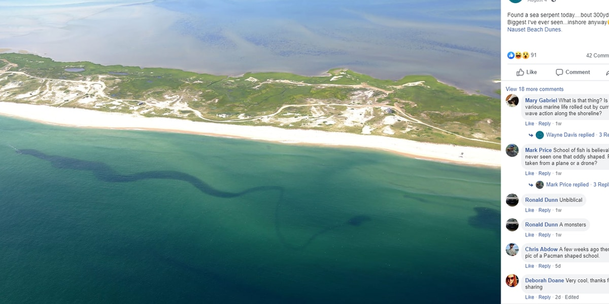A 'sea serpent' is seen lurking off Cape Cod. But some have a more logical explanation