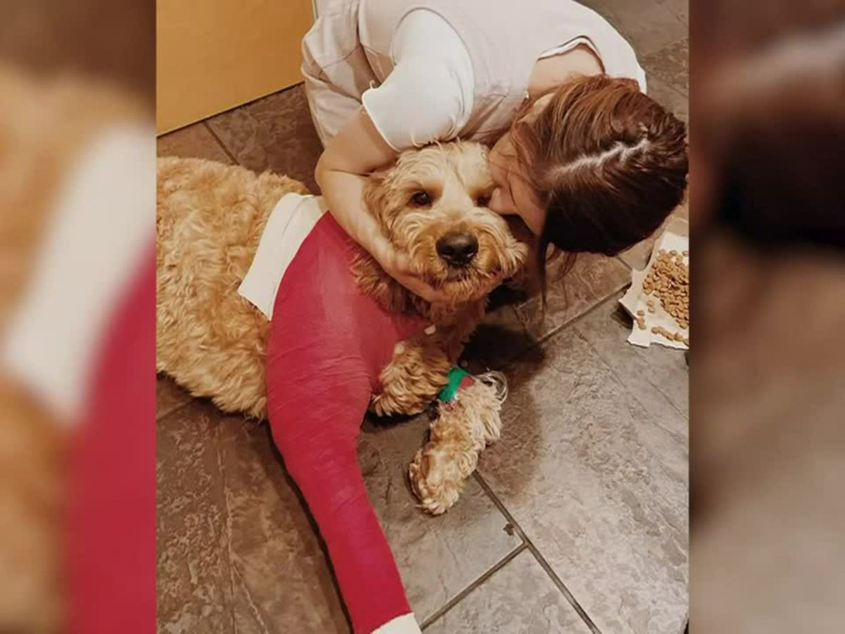 Simba the goldendoodle survives fall off 200-foot cliff