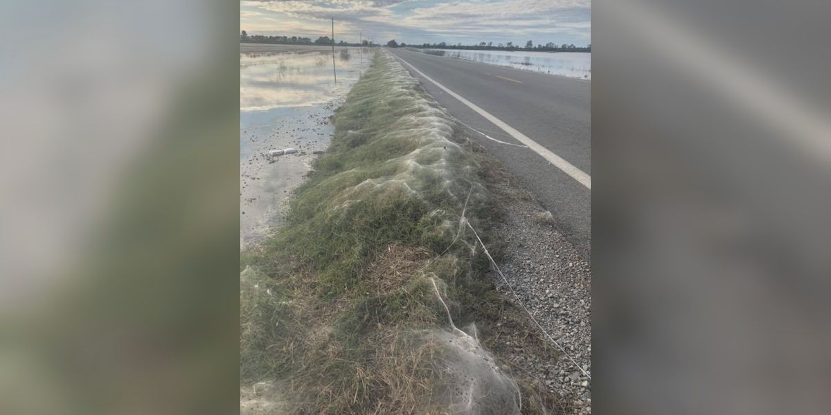 Spiderwebs found floating across Arkansas