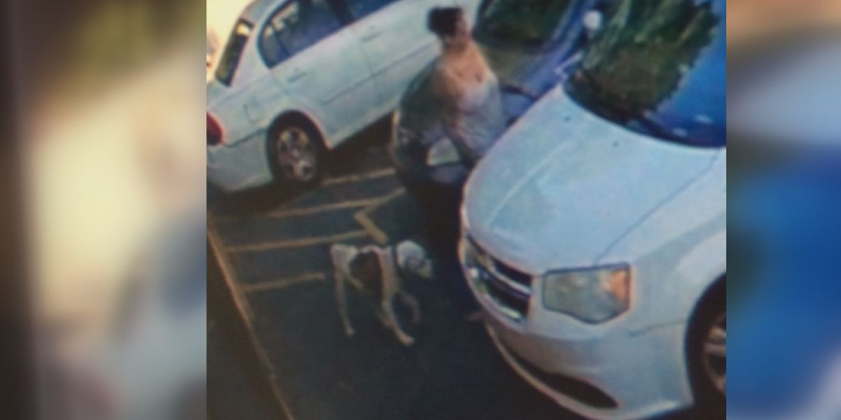 Dog owner says hero canine was stolen at west Charlotte gas station