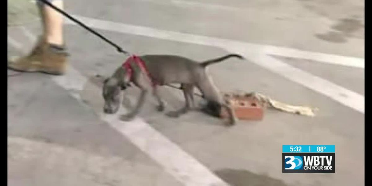 Pictures showing man leading dog tied to brick gets attention of police, animal services