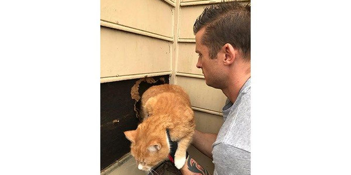 Firefighters rescue cat stuck in chimney of Cabarrus Co home