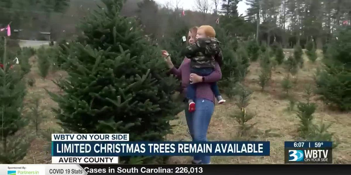 Limited Christmas trees remain available