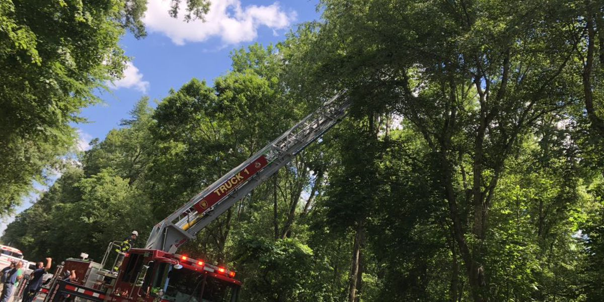 Skydiver rescued from tree in Salisbury