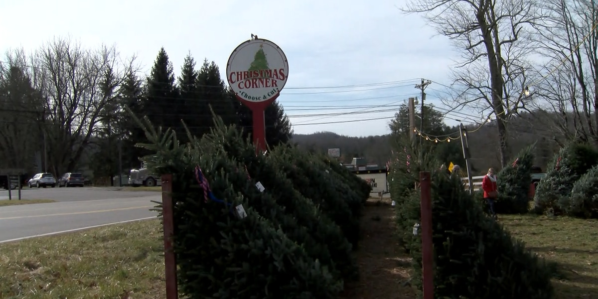 "Mountain Christmas Tree growers prepare for huge crowds for ""Green Friday"""