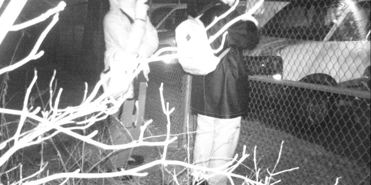 Police trying to ID duo caught on tape stealing copper from Rowan Co. business