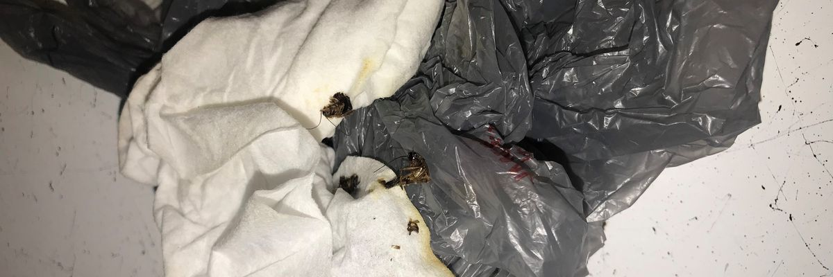'I noticed roaches coming out of the outlet': Gaston County mother given apartment with less than ideal conditions