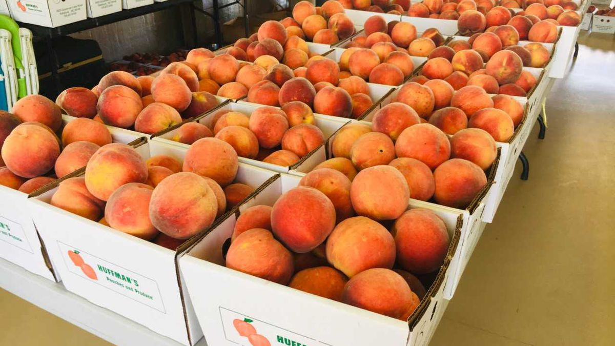 Peaches from Rowan County orchard getting rave reviews this year