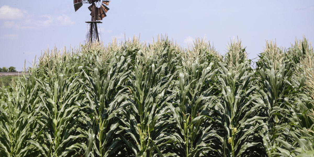 Farmers risk loss of federal payments, loans, from shutdown