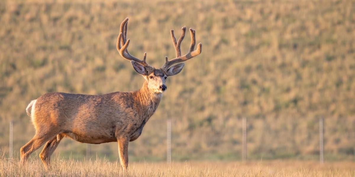 Third case of fatal deer disease sparks reminder of carcass importation bans