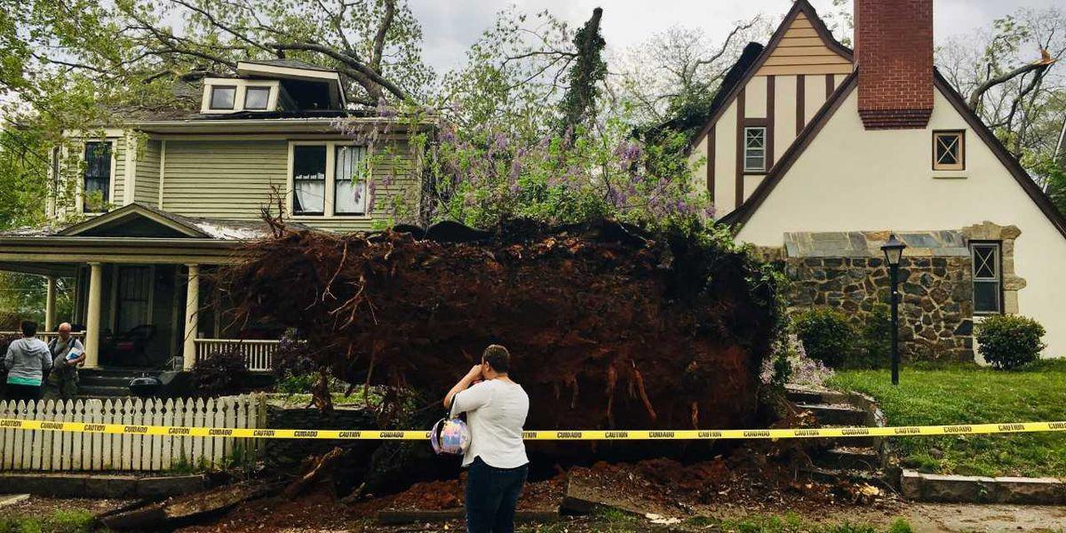 Two Salisbury homes damaged when tree falls on W. Monroe Street