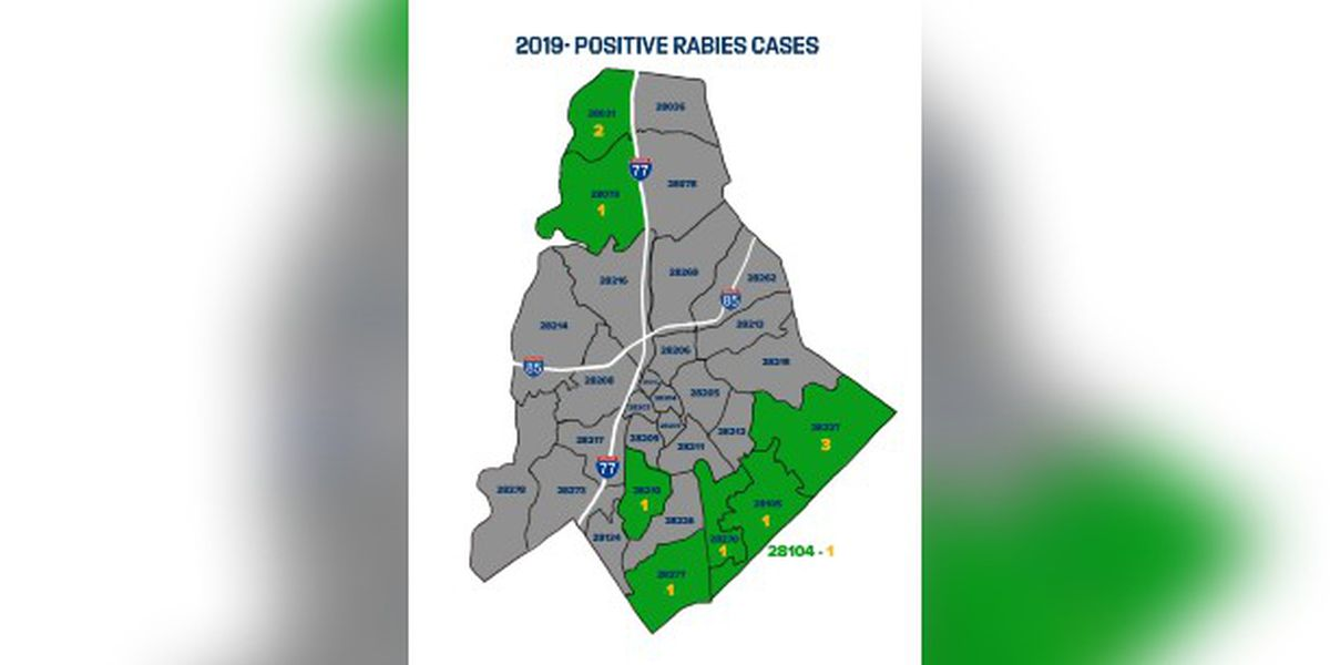 11th rabies case confirmed in Mecklenburg County
