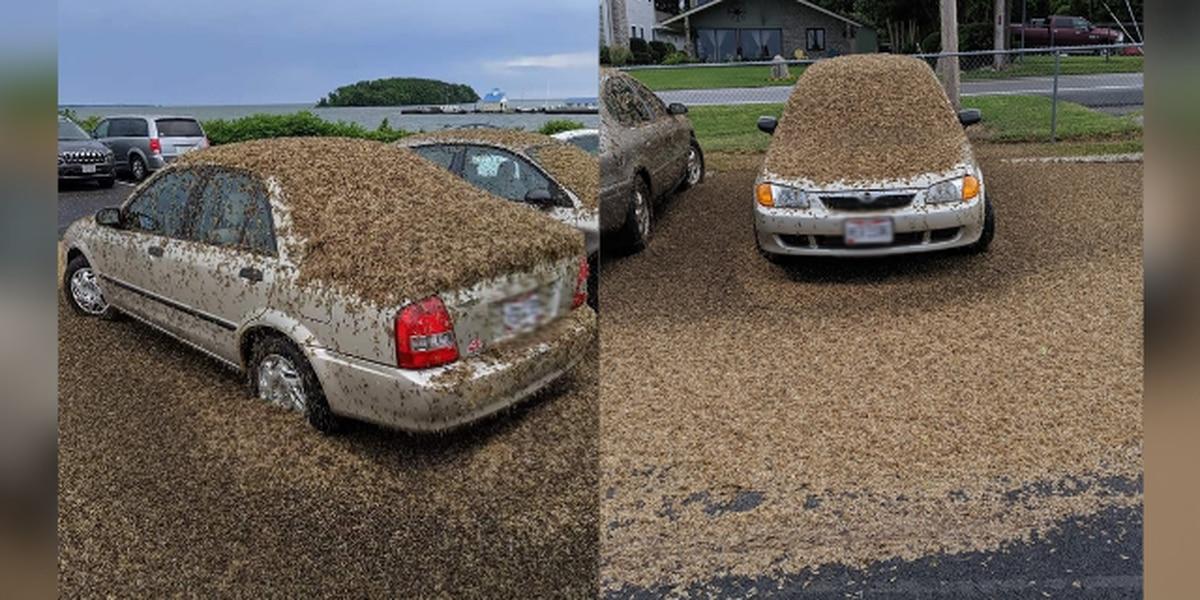 Unbelievable: Swarm of mayflies covers car near Port Clinton, Ohio