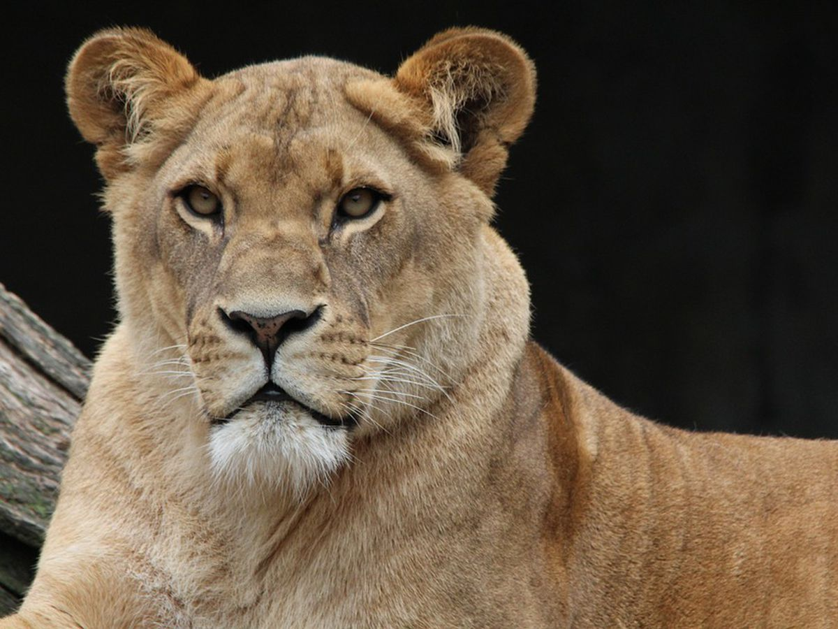"""House passes bill featured in """"Tiger King"""" that would ban most big cat ownership"""