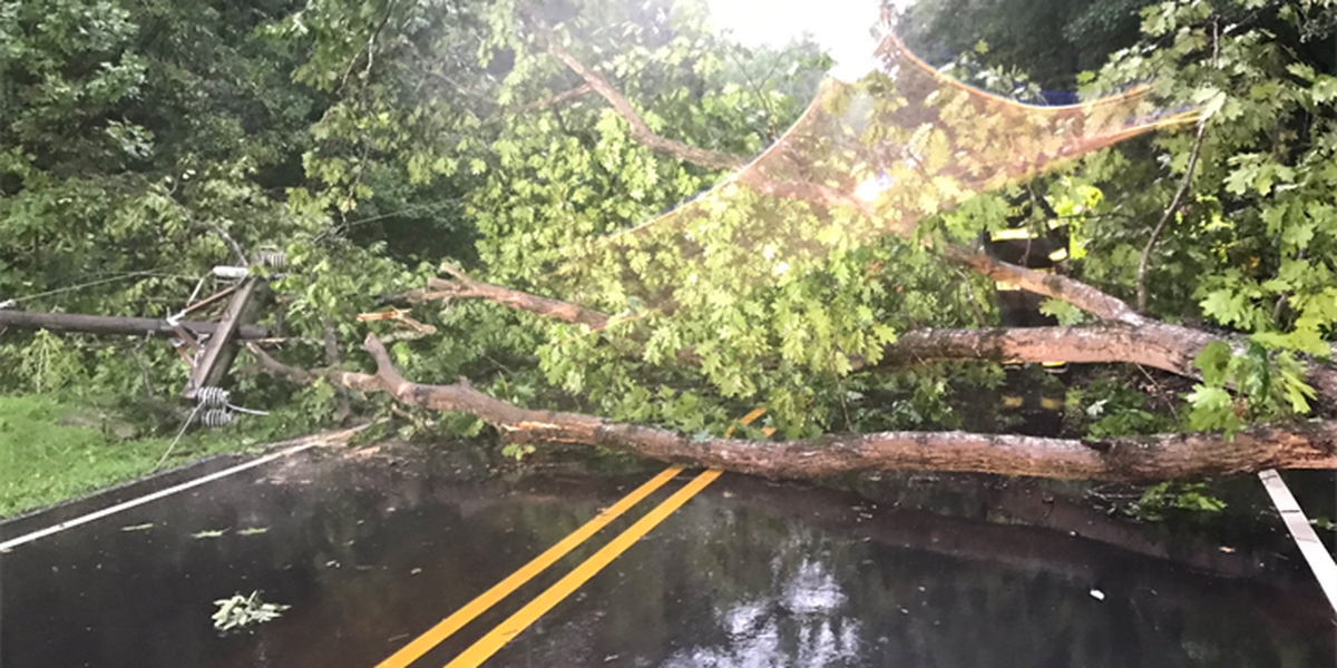 Fallen tree shuts down Huntersville road, knocks down power line on car