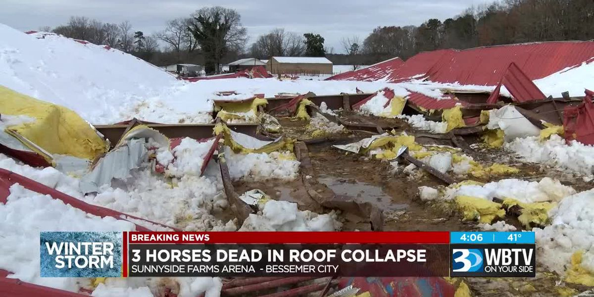 Snowstorm claims lives of three horses in Gaston County