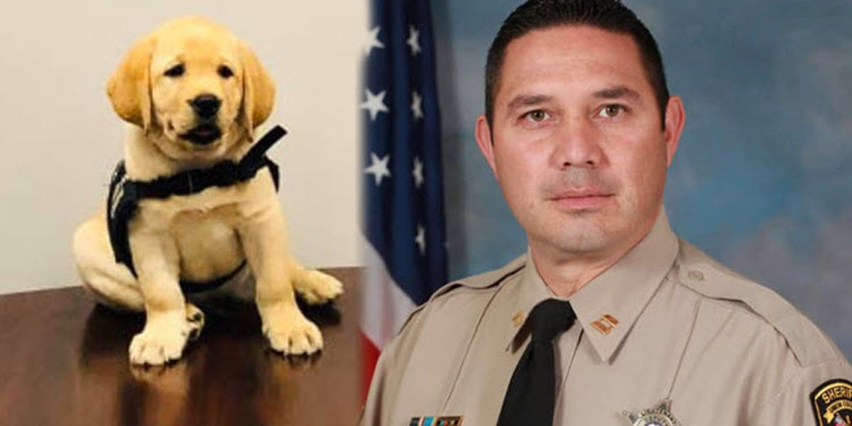 Service puppies named in honor of veteran Union County deputy