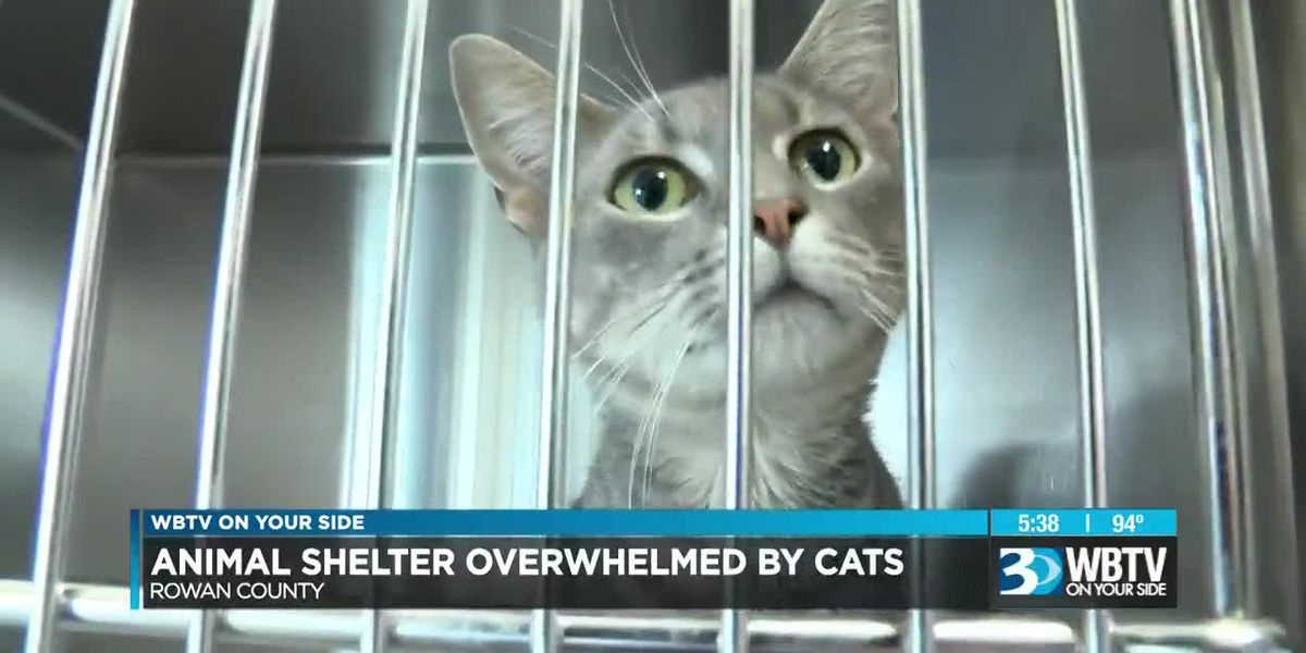 Adoption event at animal shelter Saturday, urgent need to find homes for cats and kittens