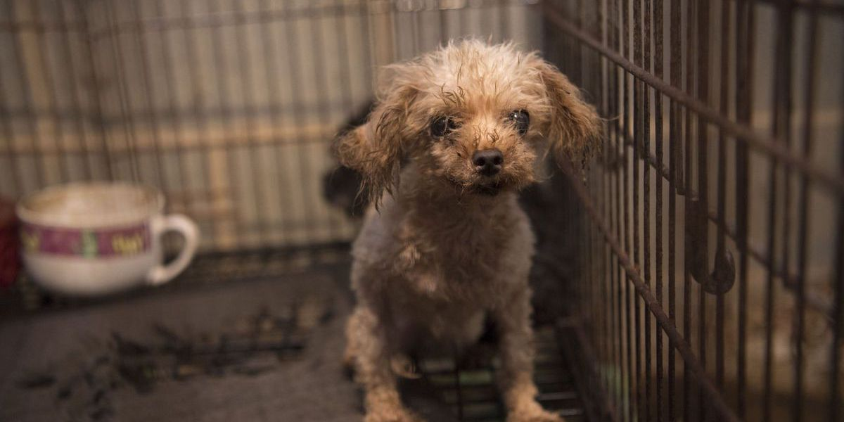 More than 100 animals seized at suspected 'puppy mill' in Cabarrus County