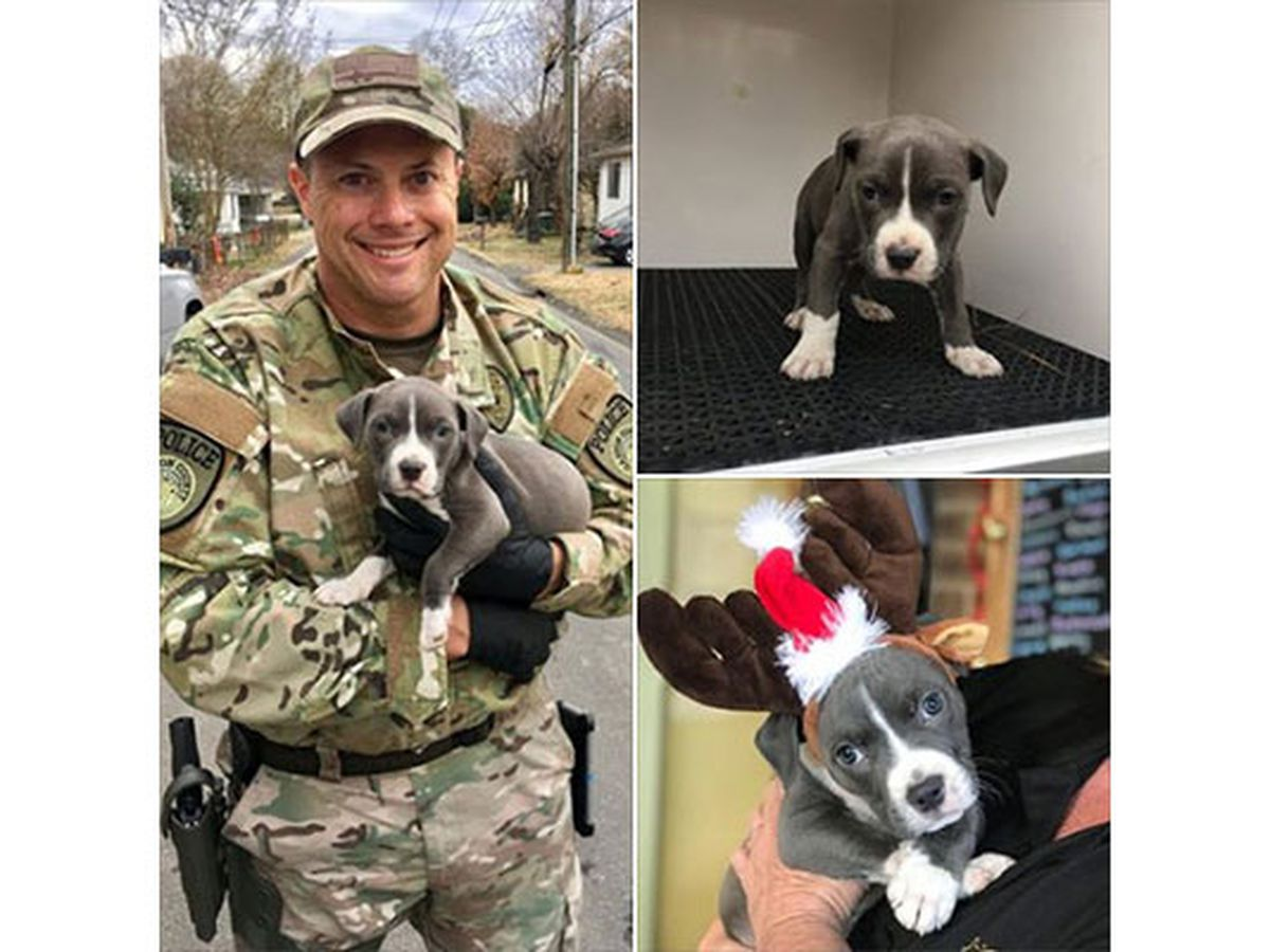 Adorable puppy surrendered during drug bust gets help from Gaston's finest