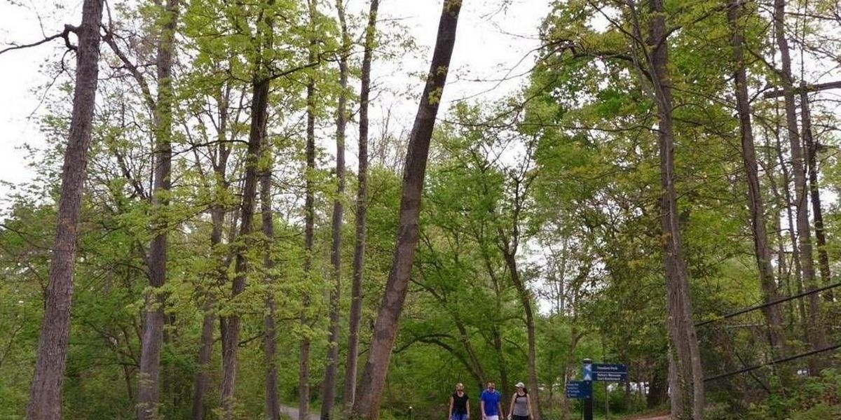 A tree-killing insect that has devastated eastern forests is confirmed in Charlotte