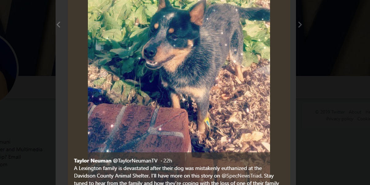 Family's beloved dog accidentally euthanized while in quarantine at NC shelter