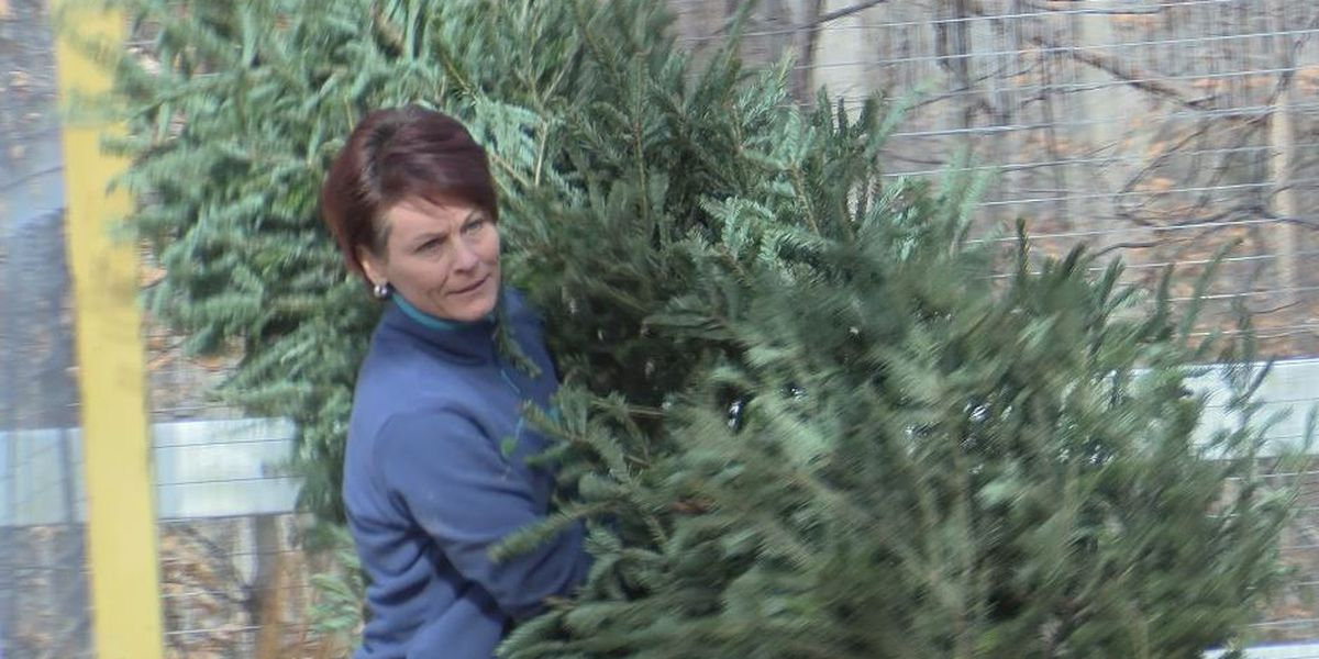 A new NC wildlife conservation center wants your Christmas trees for its animals