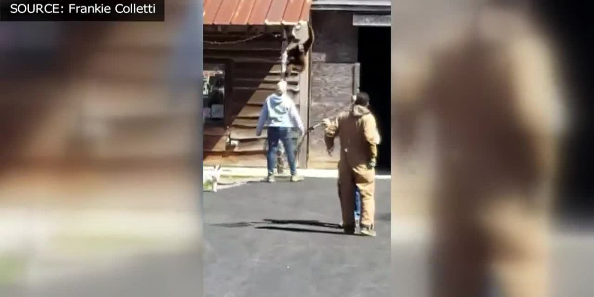 Gibbon escapes handler at Zootastic Park in NC