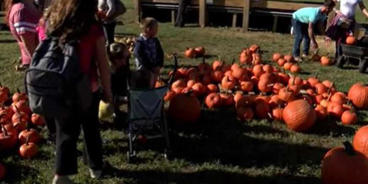 Families take advantage of fall-like weather with trip to pumpkin patch