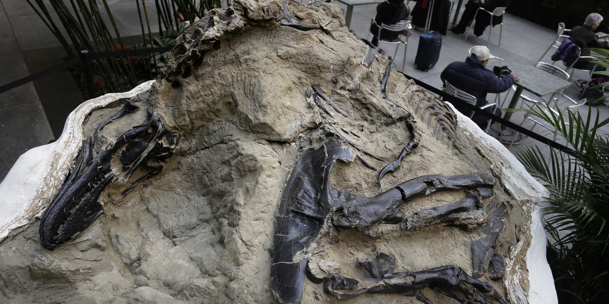 Fight over dinosaur fossils comes down to what's a mineral