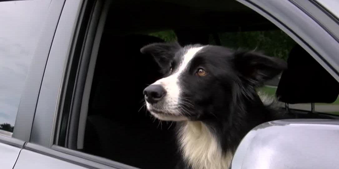 Woman searched for 57 days, quitting her job to find the dog she lost during a trip to Montana