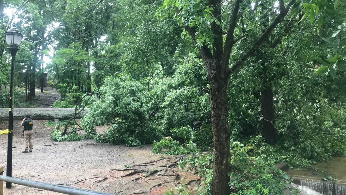 Storm knocks down large tree at Charlotte park