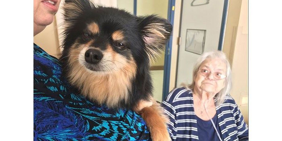 Woman in nursing home reunited with dog she had to surrender