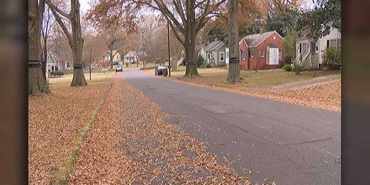 Mastiff escapes from Charlotte home, attacks mailman