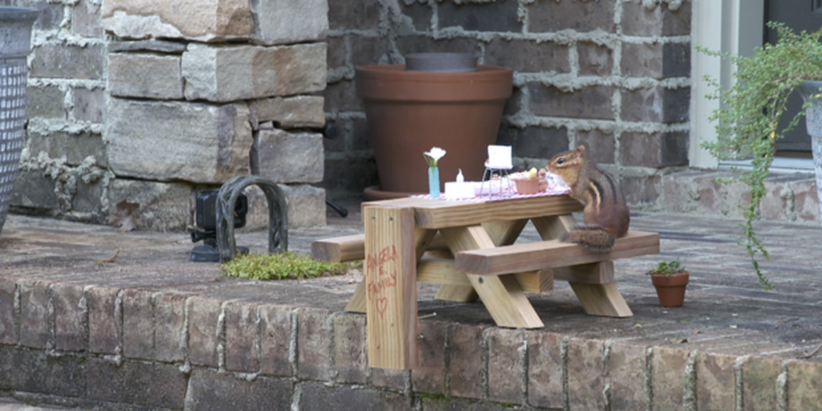 """It's brought joy"": Georgia food writer opens porch restaurant for chipmunk"