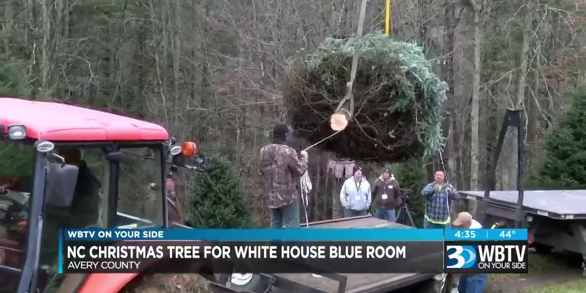 NC Christmas tree for White House Blue Room