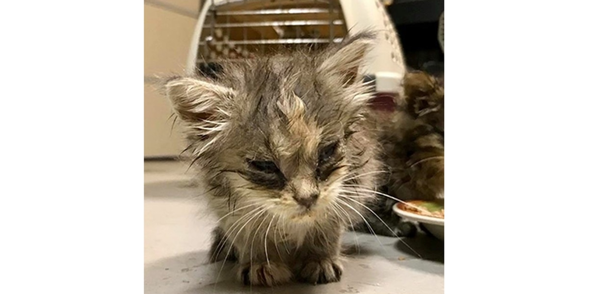 Animal lovers save sick kittens thrown on side of SC road