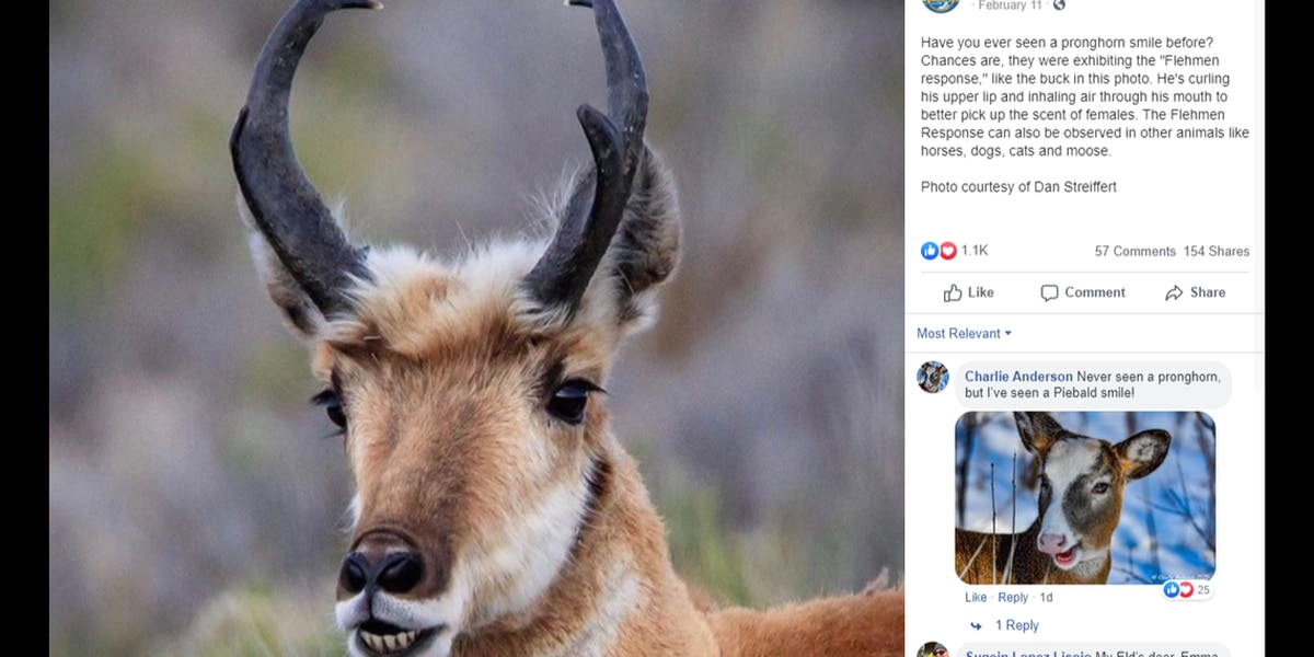Weird photo of horned animal with toothy human smile is real, wildlife officials say
