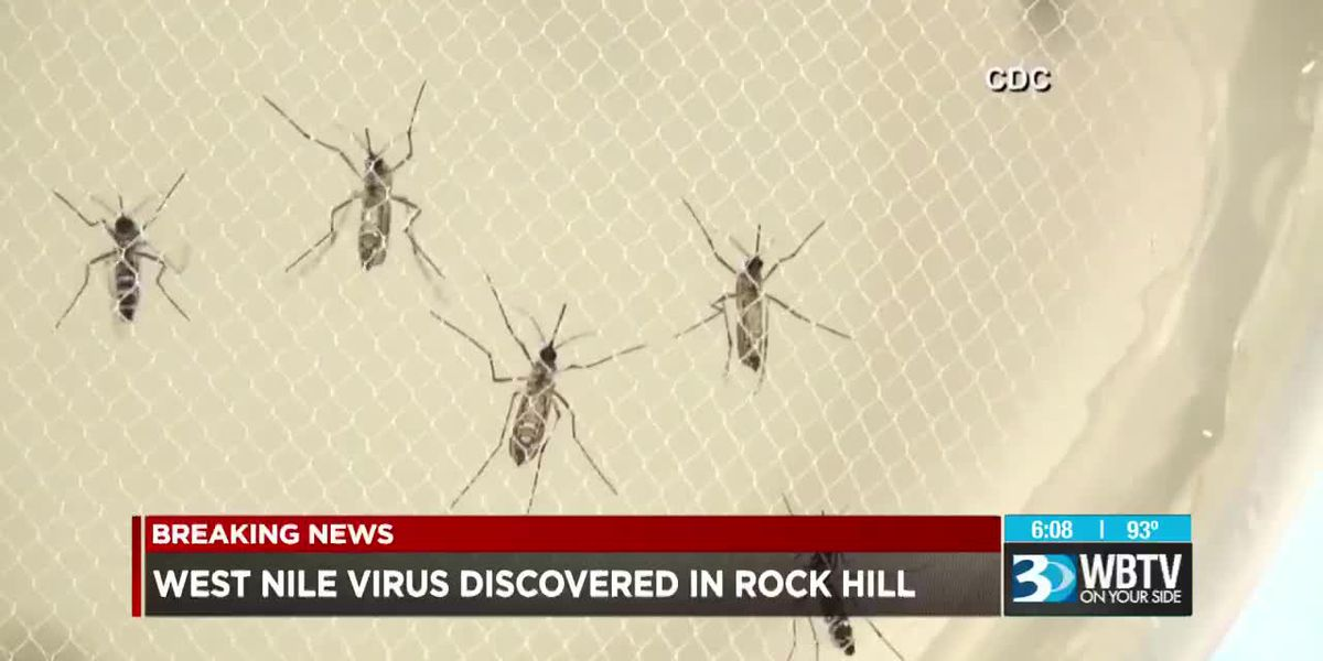 West Nile case confirmed in York County