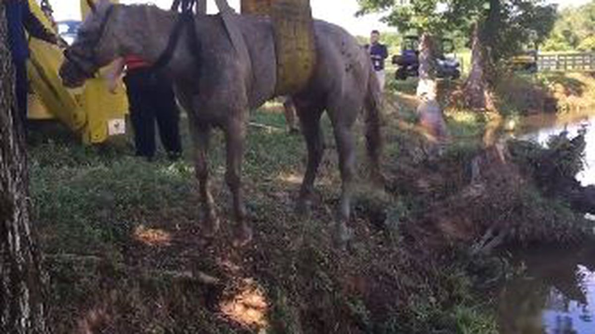 Tow truck pulls trapped horse from Catawba County pond