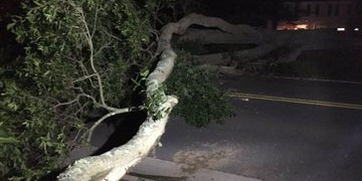 Large tree blocks road in Charlotte