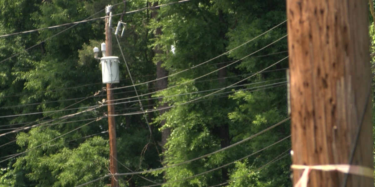 Busy portion of Union County road to close for part of day throughout week for tree removal