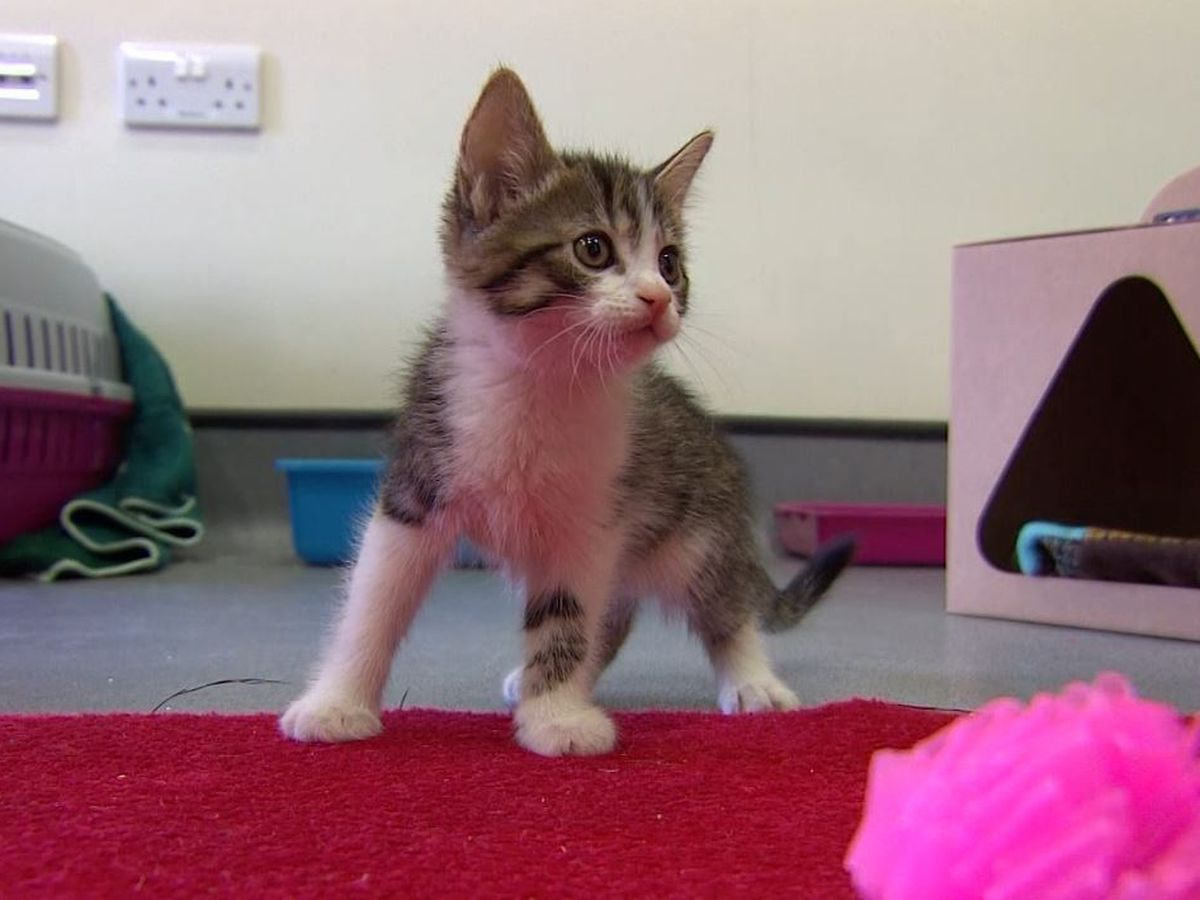 Here's why cats potentially exposed to coronavirus should stay inside